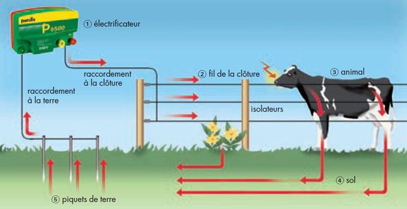 Principe d'installation d'une clôture électrique, l'alternative par excellence pour la contention de tous les animaux !